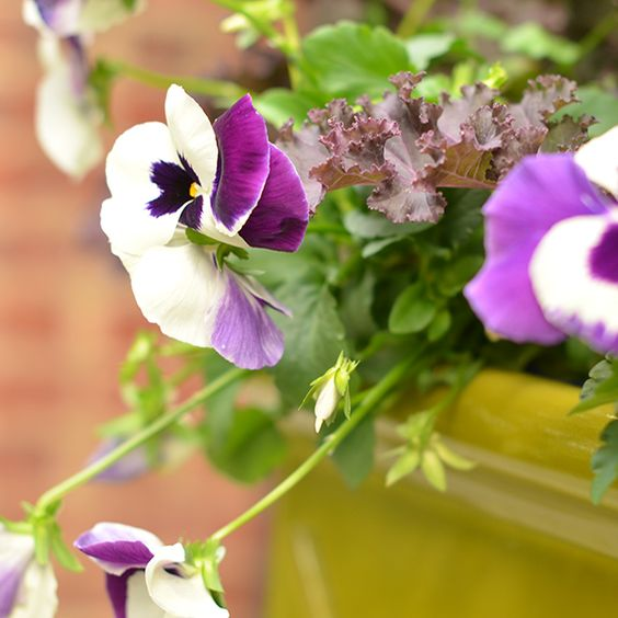 4 Festive Ideas for Fall Container Gardening: