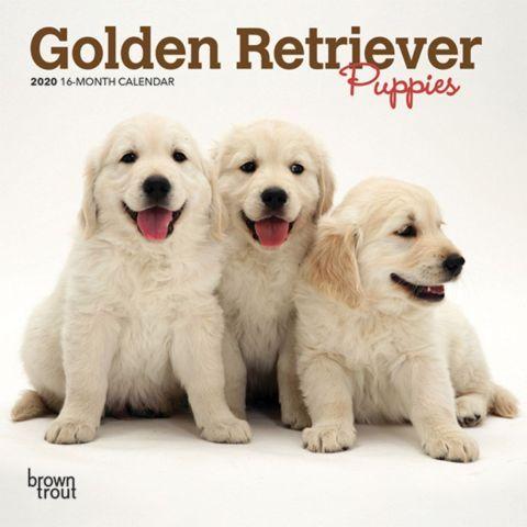 Golden Retriever Puppies 2020 Calendar Once You Hold A Golden