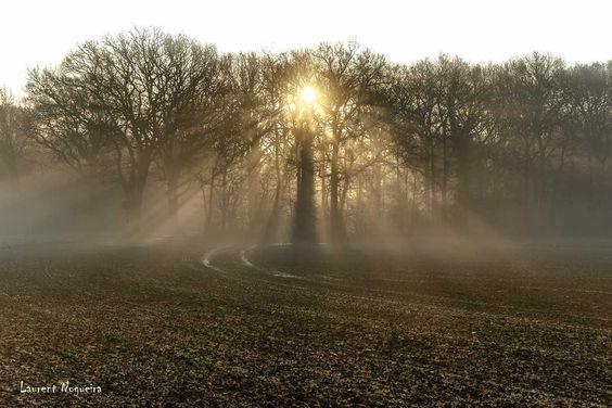 La forêt transperçé de NOGUEIRA est la Photo du Jour!  fotoloco.fr: Cours Photo gratuits et Concours Photos.  Une communaute de 22,000 passionnes! #Autheuil #28 #nature #paysage #paysages #instapaysage #beaupaysage #NatureetPaysage #Canon24105 #Canon24105mm #Canon70D #Canon #fotoloco #fotoloco_fr #concoursphoto #coursphoto #photographe #photodujour #francais #inspirationdujour #photographie http://fotoloco.fr/photo-detail/?id=82405