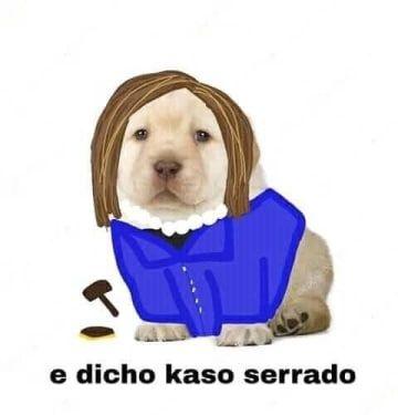 Necesito Este Perro En Mi Vida Mascotas Memes Fotos De Gatitos Tiernos Gatos Raros