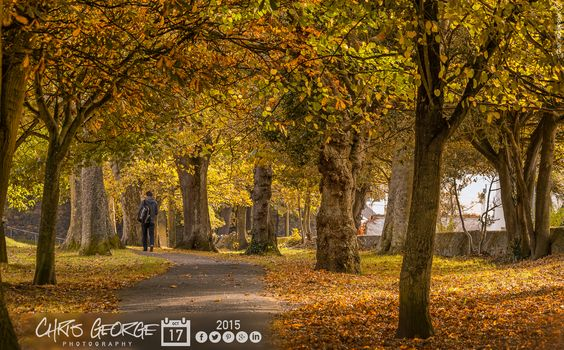 No mistaking the season now! Golden hues leading the way from Beau Sejour to Cambridge Park. #Guernsey #GreatThings  Link to the whole collection of 'Georgie's Pic Of The Day' :-http://chrisgeorge.dphoto.com/#/album/4daaes  Picture Ref: 17_10_15 — in St. Peter Port, Guernsey, Channel Islands.