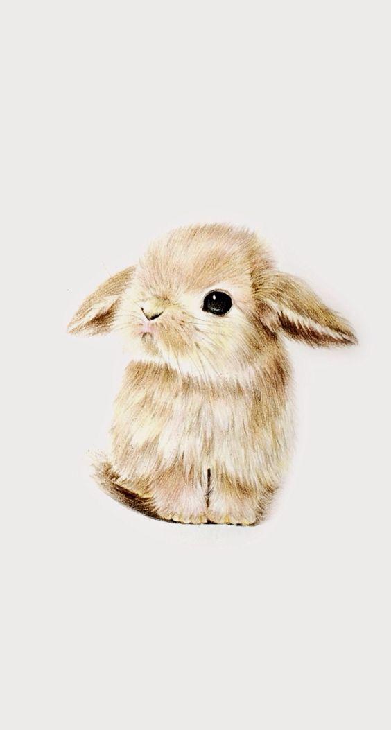 Wallpaper super cute kawaii pet love dwarf bunny rabbit