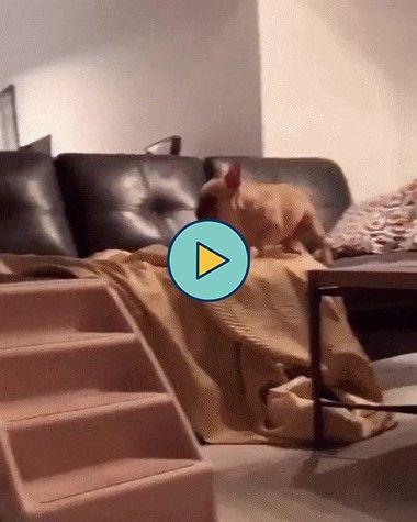 A alegria do cachorro ao vê que o dono chegou