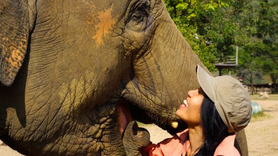 A Day at Elephant Nature Park in Chiang Mai