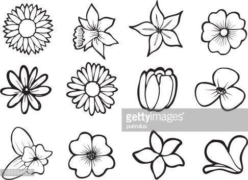 Illustrations Of Six Tropical Flowers Also Available In Full Color Flower Line Drawings Simple Flower Drawing Flower Stencil