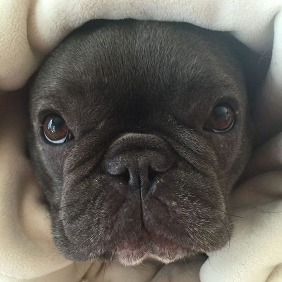 30 Celebrities With French Bulldogs And Their Cute Frenchie