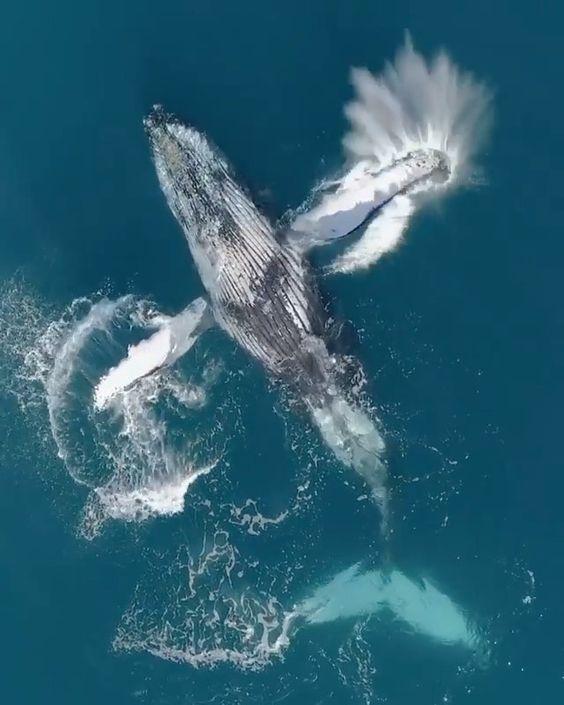 Pin Von Chumani On Tree Auf Whale Orca Dolphin Naturbilder Wassertiere Natur