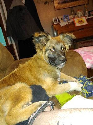 Denver Co Shepherd Unknown Type Meet Canola A Pet For Adoption Pet Adoption Adoption Pets