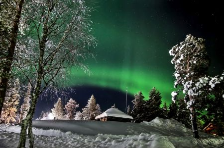 The northern lights - winter - snow, winter, trees, The northern lights