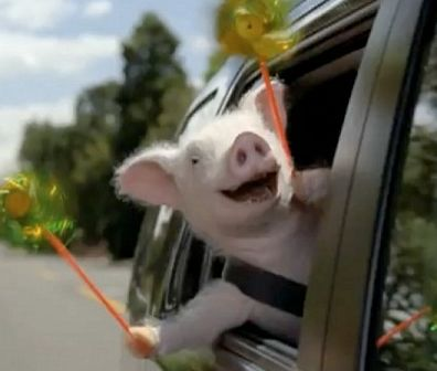 Car Insurance Commercial With The Pig