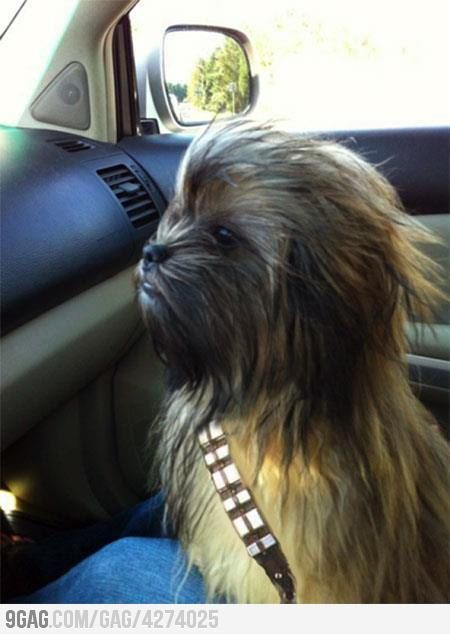 Chew-barka