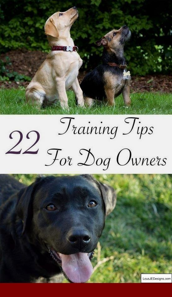 How To Train Your Dog To Stay On Your Property And Pics Of How To