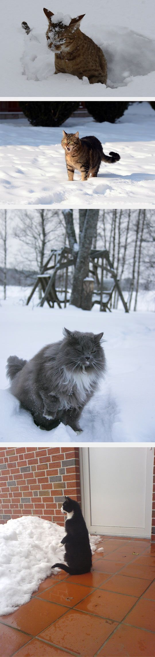 cats enjoying the snow...