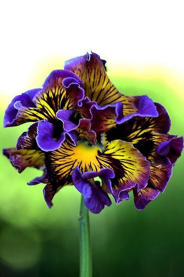 Hermoso bouquet !: