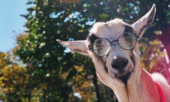Die #Brillen von #MYKITA lassen dich tierisch gut aussehen! Mehr dazu in MILAN Magazine ..