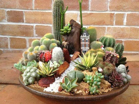 mini jardim de cactus:Succulent Dish Garden Cactus