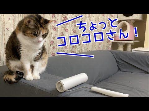 弁 猫 しゃべる 関西 で