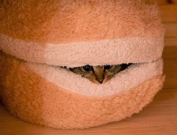 Hambúrguer de gato