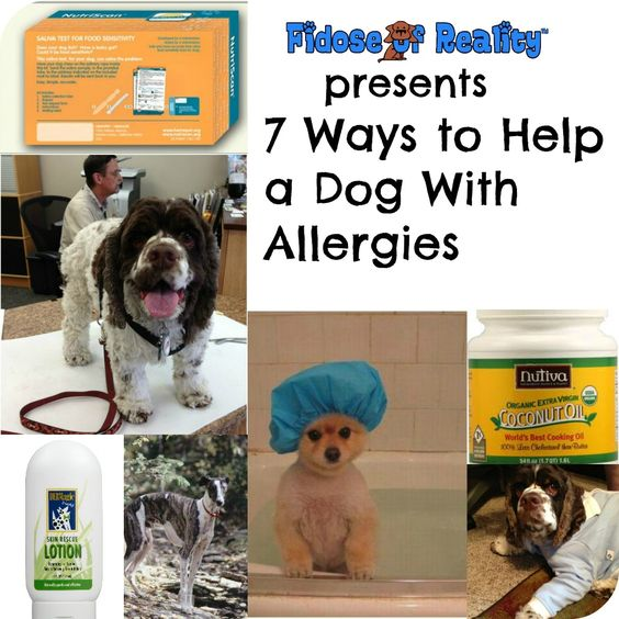 7 Ways To Help A Dog With Allergies