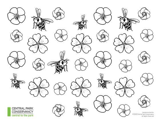 Láminas para colorear del Central Park Conservancy. Abejas y flores.