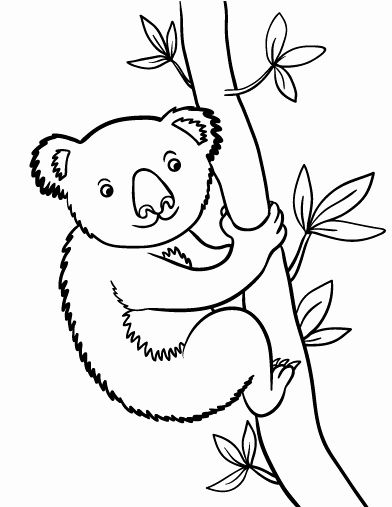 32 Koala Bear Coloring Page In 2020 Bear Coloring Pages
