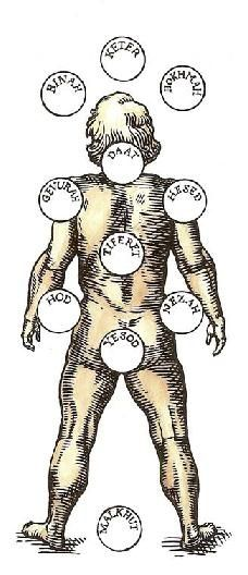 les Sephiroth et l'arbre de vie revisité ... E163ec1d45b4dba4ae95ba68e1b754a0