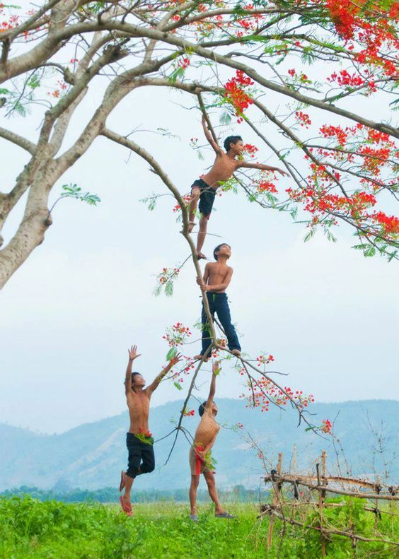 Vietnam (The Eyes of Children Around the World)Boys love to climb trees: