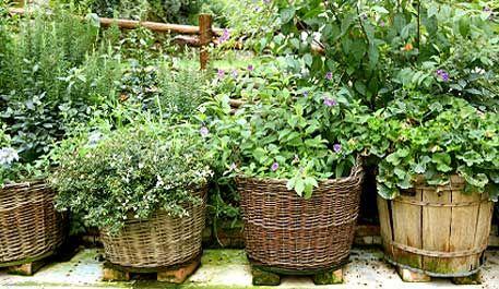 Herbs in baskets.: Garden Herbs, Growing Herb, Basket Herb, Herb Basket, Healing Herb, Medicinal Herb Garden,  Flowerpot