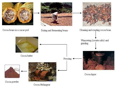 Food Magazine: The Production Process From Cocoa Beans To Semi Fi...