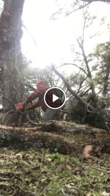 A vingança da mãe natureza, o ultimo suspiro da árvore e seu ataque