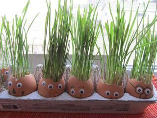SPRING in The Air Project : Fun project:  1. Empty & decorate eggs.  2. Place a couple of moistened cotton balls in the bottom of the egg.  3. Sprinkle with grass seed.  4. Continue to water & watch them grow. They may even need a haircut someday!