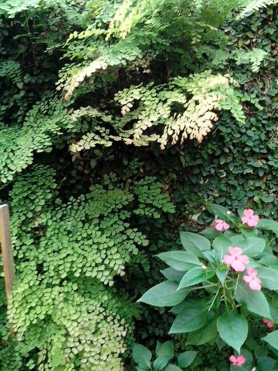 El hermoso jardin de mi hermana.