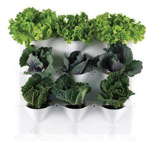 Gemüseanbau in der Küche mit Minigarden: http://www.wohnambientedirekt.de/minigarden-1set-weiss.html