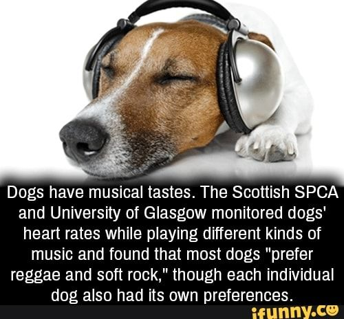 Dogs Have Musical Tastes The Scottish Spca And University Of Glasgow Monitored Dogs Heart Rates While Playing Different Kinds Of Music And Found That Most Dog Spca Kinds Of Music Musicals