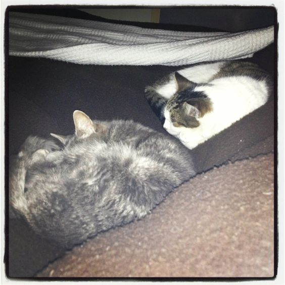 My protective cats!