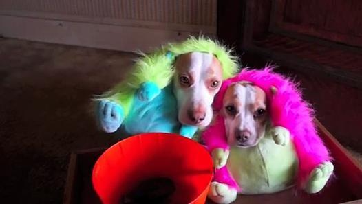 Des chiens heureux de fêter halloween - be-troll.com pour toutes nos vidéos drôles / insolites / buzz