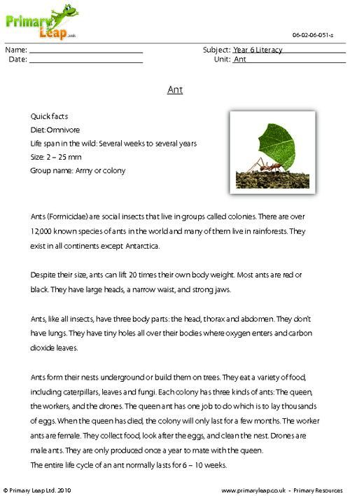 Worksheets Read The Passage this ks2 reading comprehension includes a passage with some interesting facts about the ant students read text and then answer stu