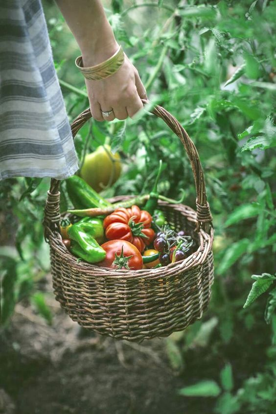 A basket full of fresh, ripe farm veggies.