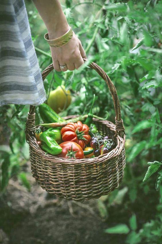 A basket full of fresh, ripe farm veggies.