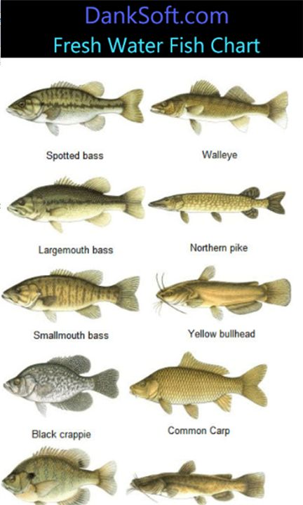 Freshwater fish google search fish tales pinterest for 7 fishes list