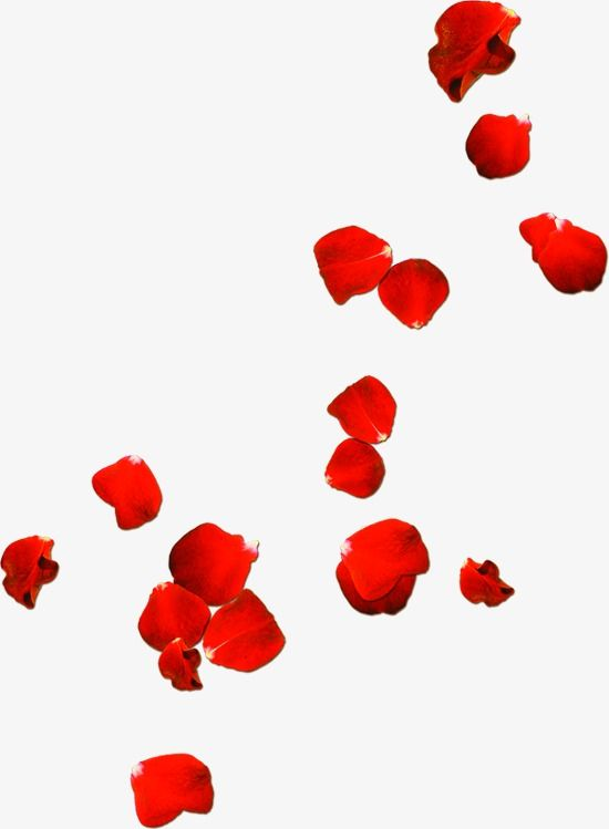 Rose Petals Drift Day Rose Clipart Drift Rose Png Transparent Clipart Image And Psd File For Free Download Red Rose Petals Flower Png Images Rose Clipart