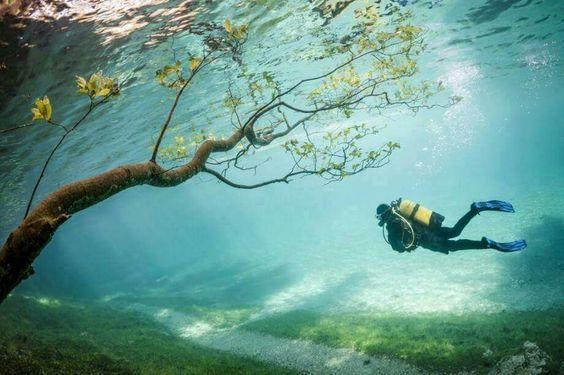 Taucher im Grünen See