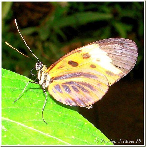 Les papillons (10)