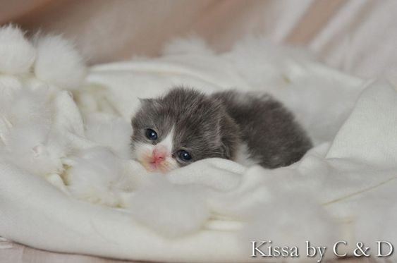 Pin By Claudine Owens On Furbabies With Images Newborn Kittens Cute Little Animals Tiny Kitten