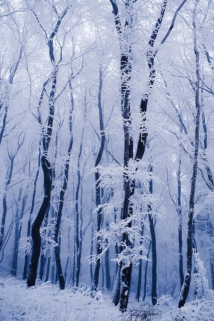 ❄ A MidWinter's Night's Dream ❄... Snow in Franconian Forest - Oberfranken, Germany... By Artist Unknown...