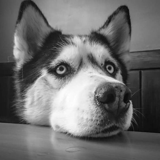 5 Best Dog Food For Huskies Fuel For Winter Wanderers Best Dog