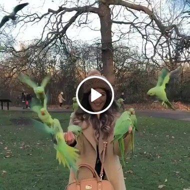 A garota que se diverte com os seus papagaios