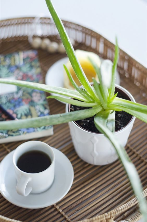 Air-purifying houseplants naturally improve the quality of air in your home! Aloe vera Keep dry, low light, indirect sun