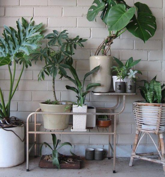 Decoreba Design: Plantas em casa