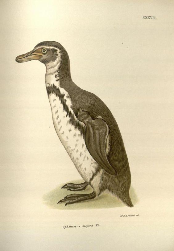 no. 12-15 1896-1902 - Anales del Museo Nacional de Chile. - Biodiversity Heritage Library